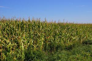 Sembradora maíz - Maquinaria Agricola Nunez