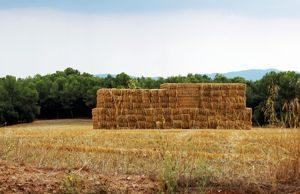 Segadora alfa - Maquinaria Agricola Nunez