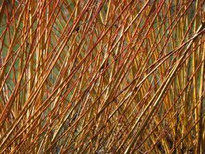 Trituradoras de ramas - Maquinaria Agricola Nunez