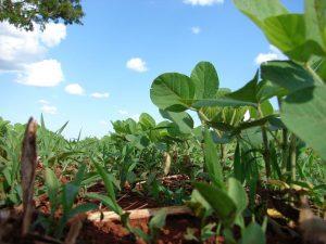 Pulverizador herbicida - Maquinaria Agrícola Núñez