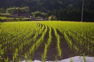 Sembradoras de siembra directa - Maquinaria Agrícola Nunez