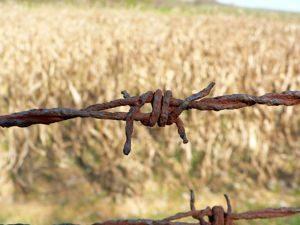 Trituradora de ramas - Maquinaria Agricola Nunez